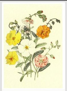 Vintage flowers...I will be SO happy once I get some vintage flowers tattoed in my body