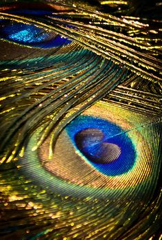 Peacock detail - eye feathers in 2019 Peacock Decor, Peacock Colors, Peacock Art, Peacock Feathers, Peacock Logo, Peacock Images, Peacock Pictures, Peacock And Peahen, Feather Wallpaper