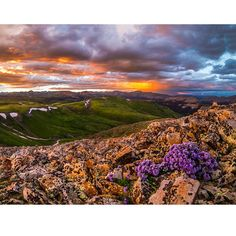 Durango's Wildflower Season