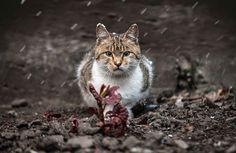 Expressive Portraits Capture The Soulful Beauty Of Animals Animal - Ukrainian photographer sergey polyushko shoots captivating animal portraits