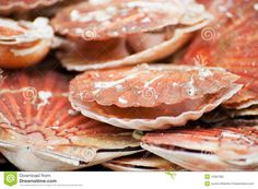 Photo about Delicacy in France Scallop shells for food purpose. Image of typical, food, france - 15387392 Scallop Shells, French Food, Scallops, Eating Well, Recipes, Ripped Recipes, Clean Eating Foods, Healthy Eating