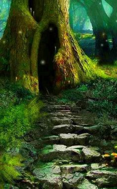 Enchanted forest...