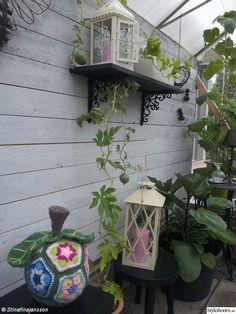 trädgård,virkat äpple,pall,trävägg,växthus