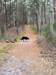On a walk in Clapps Pond Forest, Provincetown