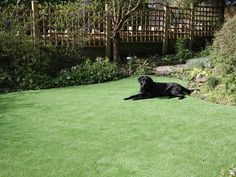 Backyard Landscaping Ideas For Dogs Artificial Grass