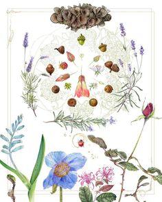 """""""Garden"""" . #plants #botanical #flowers #botanicalartist #acorns #rose #botanicalart #botanicalillustrations #botanicalillustration #watercolorpainting #watercolor #mandala #beautiful . Www.patreon.com/StephanieLaw"""