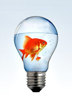 Download free Fish Inside Bulb Mobile Wallpaper contributed by brederick, Fish Inside Bulb Mobile Wallpaper is uploaded in iPhone Wallpapers category.