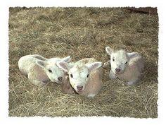triplets!  #Allison, awe!!!