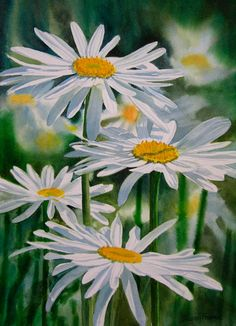 White Shasta Daisies by Sharon Freeman