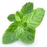 What can you replace with Peppermint?  Aleve, DayQuil, NyQuil, Tylenol, Tums, Motrin, Prevacid, Alka Seltzer, Claritin, Zyrtec, Mouthwash and Breath Fresheners  http://www.mydoterra.com/lorrainekeller/