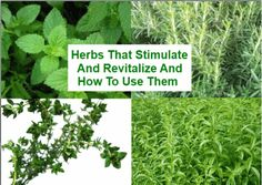 Herbs That stimulate and revitalize and how to use them - Holistic Health Holistic Remedies, Natural Health Remedies, Herbal Remedies, Arthritis Remedies, Headache Remedies, Healing Herbs, Medicinal Herbs, Water Retention Remedies, Cold And Cough Remedies