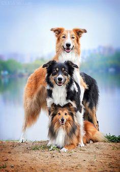 Hay que tener suerte para pillar a 3 perros en esta posición y tan sonrientes mirando a cámara, jaja..