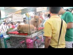 The video is of a past famous live animal market in Hanoi, Vietnam. The primary person in this Video is Ho Nguyen, the lead in a movie called Alamo Bay. Some...