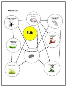 Food Web Worksheet 6th Grade food chains and food webs cloze reading ...