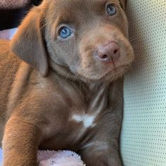 Discover The Enthusiastic Black Labrador Retriever Pups And Kids Cute Labrador Puppies, Cute Dogs And Puppies, Little Puppies, I Love Dogs, Baby Labrador, Doggies, Corgi Puppies, Cute Funny Animals, Cute Baby Animals