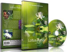 Entspannungs DVD - Lotus Teich für Entspannung und Mediation: Amazon.de: Orchideen, Lotus und Koi Teichen Szenerien von Blumen, Tony Helsloot, AMBIENT COLLECTION: DVD & Blu-ray