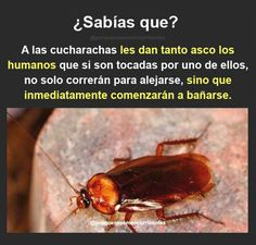 pues ya es un sentimiento mutuo Curious Facts, Did You Know, The More You Know, Acham, Interesting Information, True Facts, Knowing You, Stupid, El Humor