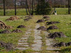 ja, er is leven onder de grond in Friesland