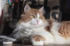 As cats get older, not only does their appearance alter, but their behavior can change as well. Here are some signs to look for as he ages.