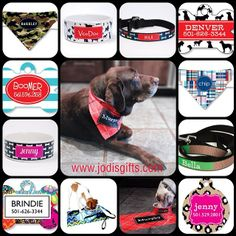 Customize your doggy love. #dog #leash #collar #puppy