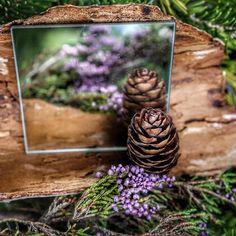 Ferien bedeuten auch Zeit und Musse für mein #spiegelprojekt zu haben. Terrarium, Home Decor, Mirrors, Projects, Terrariums, Decoration Home, Room Decor, Home Interior Design, Home Decoration