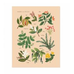 Illustrated art print created from an original gouache painting by Anna Bond. Peach Herbs & Spices Art Print – x by Rifle Paper Co. Art And Illustration, Illustrations, Botanical Illustration, Impressions Botaniques, Illustration Botanique, Guache, Rifle Paper Co, Gouache Painting, Dot And Bo