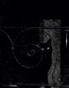 black cats -