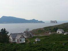 Ile Bonaventure (Gaspésie, Québec) - C'est fou (Bassan) comme c'est beau!
