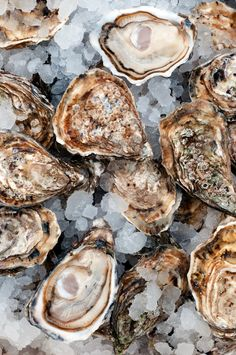Myth Busting: What Time of Year Is It Safe to Eat Oysters? Fish Recipes, Seafood Recipes, New Recipes, Delicious Recipes, Tasty, Mashed Potatoes Calories, Raw Oysters, Fairy Food, Seafood