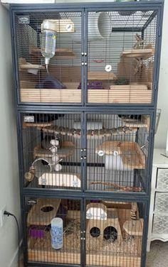 Triple Chinchilla Cages
