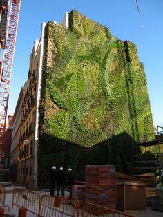 2 months after installation, Dec. 2006 - Vertical Garden by Patrick Blanc, Caixa Forum, Madrid