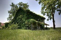 Spring Hill Plantation