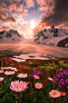Mountains and Wildflowers in Alaska