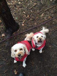 Wilma & Betty z