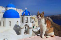 The Cats of Santorini Island - The Purrington Post