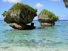 Mushroom coral reef