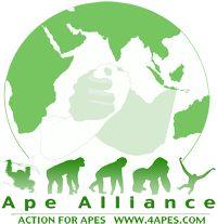 Corporations plan to destroy remaining orangutan habitat - Ape Alliance Palm Oil, Habitats, Plant Leaves, Trees, How To Plan, Tree Structure, Wood