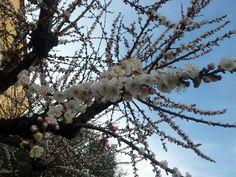Apricot flower & sky Dandelion, Sky, Garden, Flowers, Plants, House, Heaven, Garten, Home