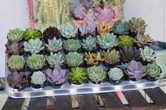 Succulents make the perfect wedding or event gift. This collection is for our inch gorgeous ROSETTE succulents . These stunning succulents are great favors Succulent Pots, Planting Succulents, Succulent Gardening, Container Gardening, Succulent Landscaping, Succulent Containers, Succulent Arrangements, Container Flowers, Container Plants