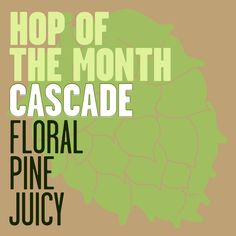 In the American beer scene, no other variety of hops has the presence Cascade Hops can boast.