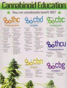 Cannabinoid Education www.elixinol.com