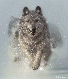 11-Running-Wolves-Collin-Bogle-Animal-Wildlife-in-Art-www-designstack-co