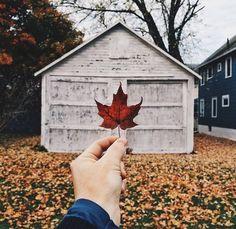 ♚ Bella Montreal ♚ Insta: bella.montreal || Pinterest & WeHeartIt: bella4549 || Maple autumn leaf