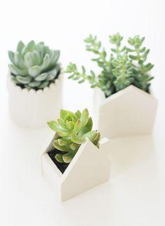 maison-pot - succulents