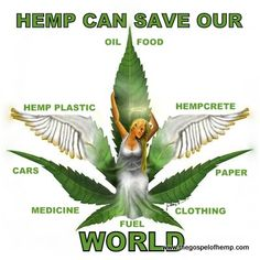 Hemp is one of the most versatile plants on the planet. Food, clothing, paper, construction, skincare and more! This plant is going to save the world. Marijuana Facts, Medical Marijuana, Weed Facts, Herbalism, At Least, 1, Healing, California, Nature