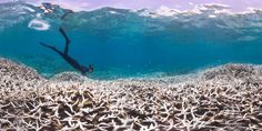 By 2030 half the worlds oceans could be reeling from climate change scientists say #news #alternativenews