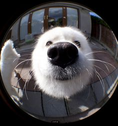knock knock who's there? meeeeeeee! *woof*