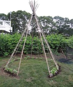 Build a a bean teepee.