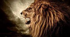 Lion Profile, Roaring Lion, Lion Wallpaper, Photo Wallpaper, Le Roi Lion, Lion Of Judah, Fauna, Animal Photography, Lions