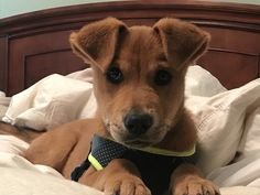 Jack Russell Terrier Puppy For Sale In Bangalore Best Price
